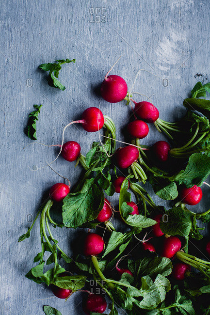 A bunch of fresh whole red radishes