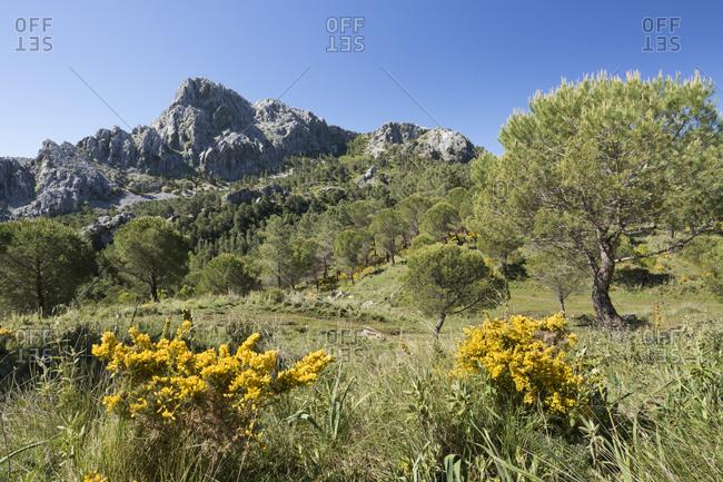 Rugged mountain scenery in spring near Grazalema, Sierra de Grazalema Natural Park, Andalucia, Spain, Europe