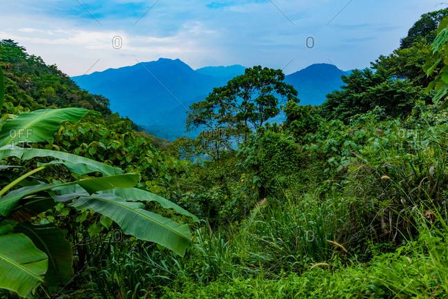 Scenic of the tea country in Sri Lanka, Asia