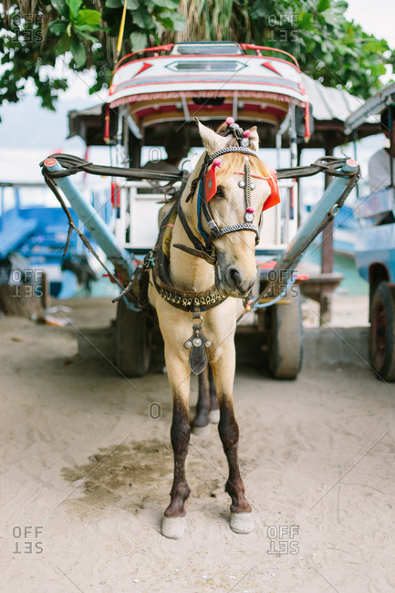 Horse and carriage on the gili islands, Lombok Indonesia