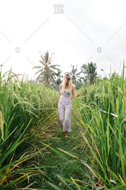 A blonde woman wearing sunglasses walks through a rice farm