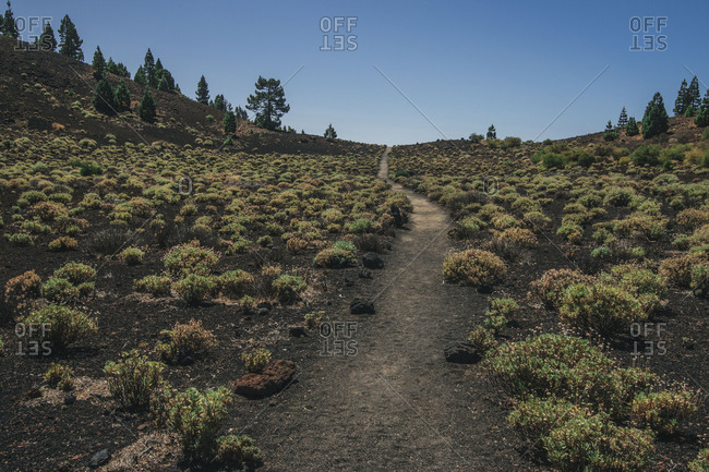 Perspective view of pathway running through terrain with small green bushes and coniferous trees, Spain