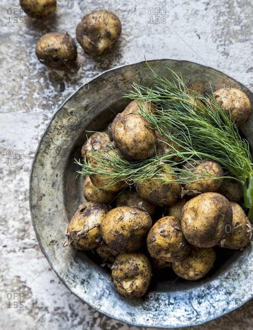 Fresh new potatoes with dill
