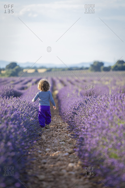 Adorable little girl walking in purple lavender field