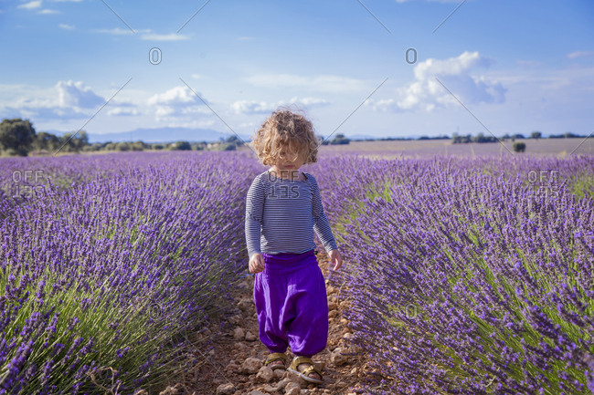 Adorable little girl walking in purple lavender field
