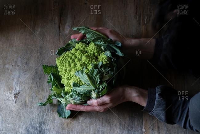 Hands holding fresh Romanesco broccoli