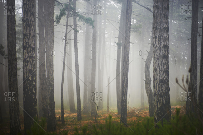 Misty weather creeps through the forest