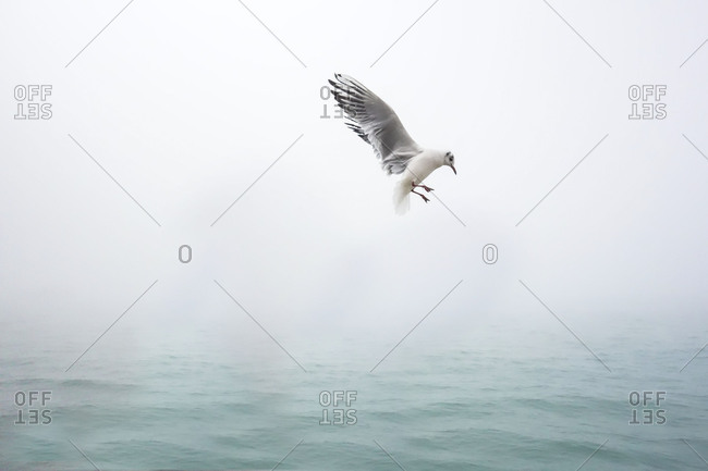 Seagull flying mid air over the sea in Venice