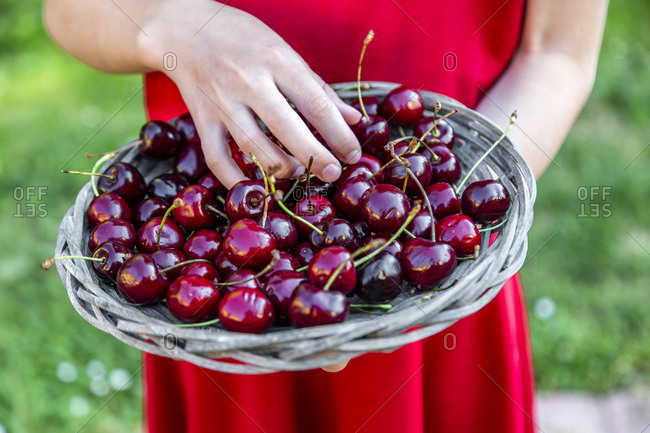 Girl holding basket of cherries- close-up