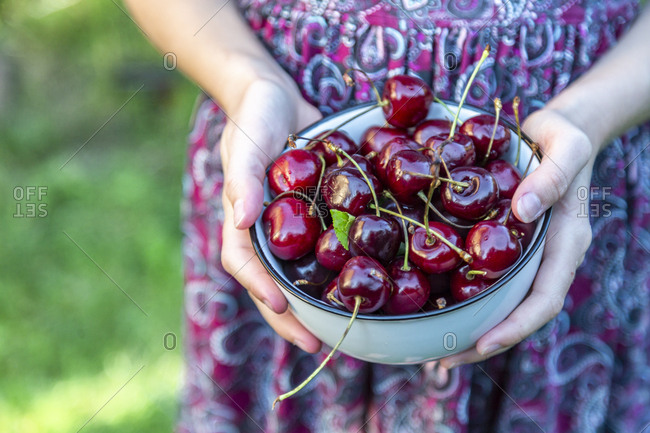 Girl's hands holding bowl of cherries- close-up