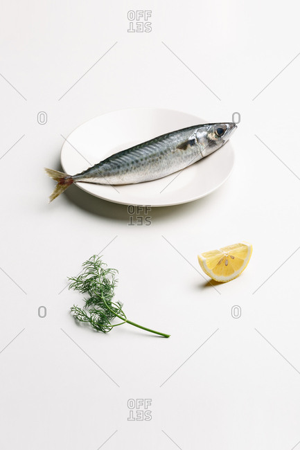 Mackerel on white plate, lemon and dill, minimalist composition