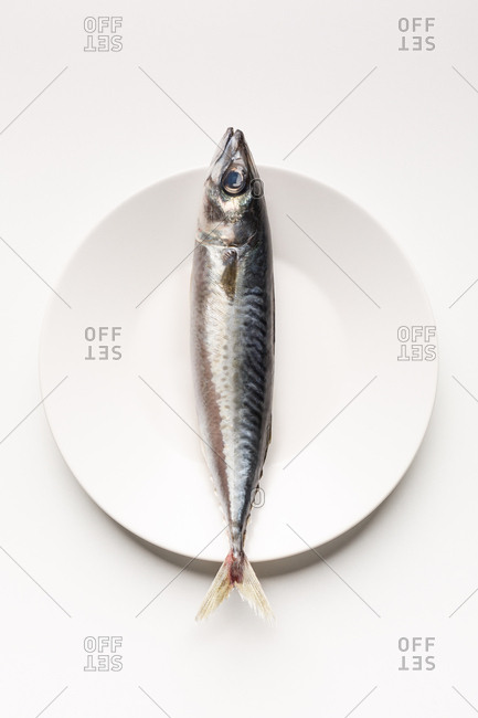 Mackerel on white plate, minimalist composition