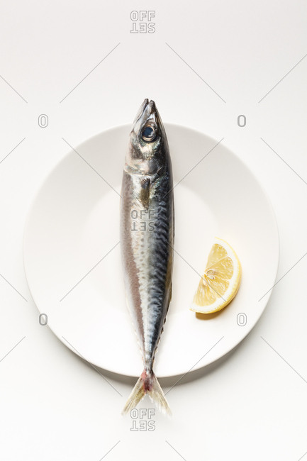 Mackerel and lemon slice on white plate, minimalist composition