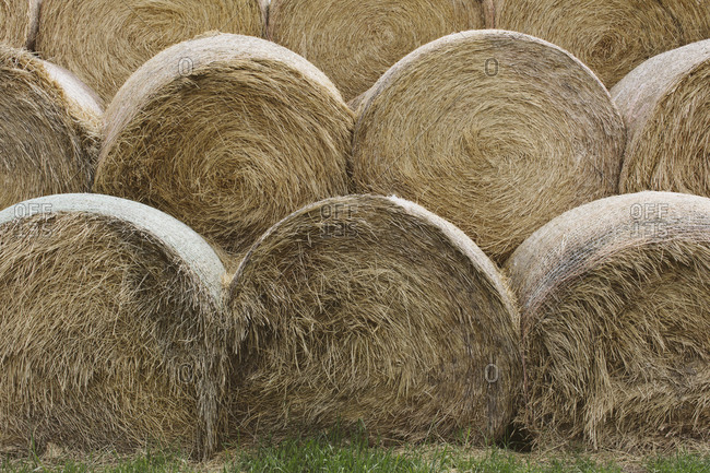 Stacked hay bales after the harvest, winter fodder for animals