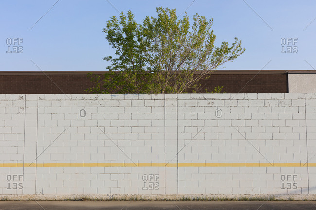 Tree behind playground wall and building, Swift Current, Saskatchewan, Canada