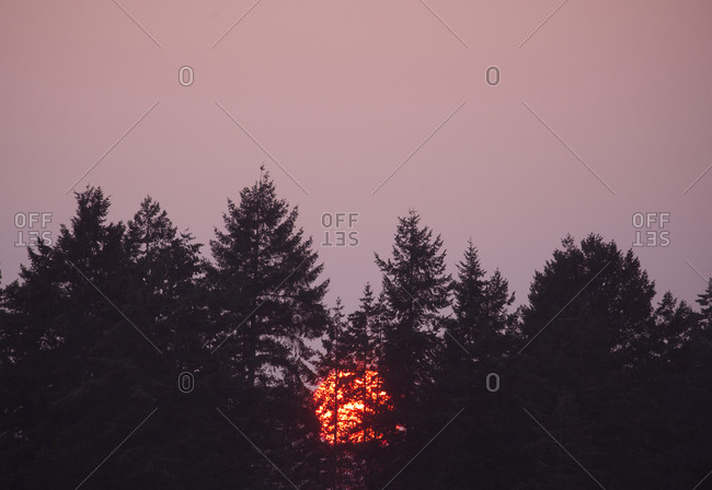 Sunset in trees
