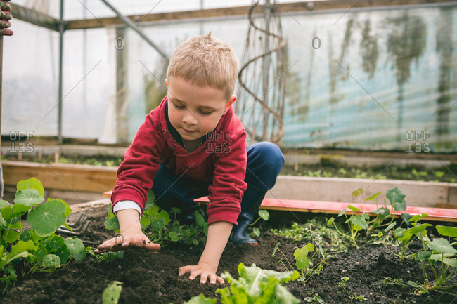 Kid patting soil on top in greenhouse