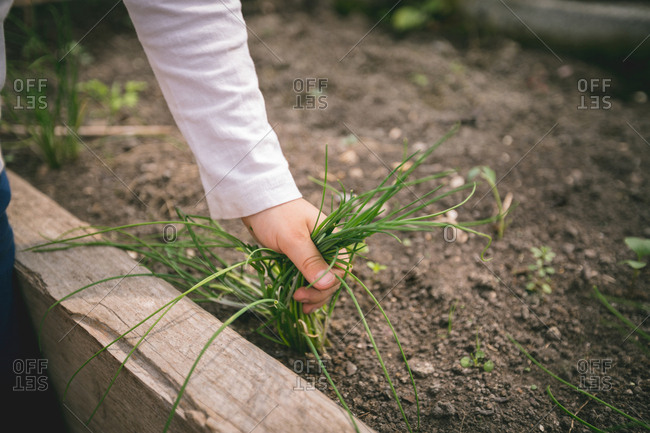 Close-up of boy pulling grass weed at greenhouse
