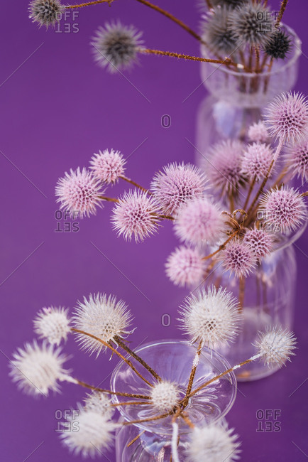 Table decoration, glass vases, globe thistles, coloured, detail