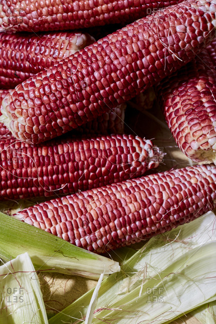 Close up of freshly shucked red corn