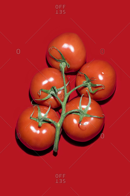 Tomatoes with vines on red background