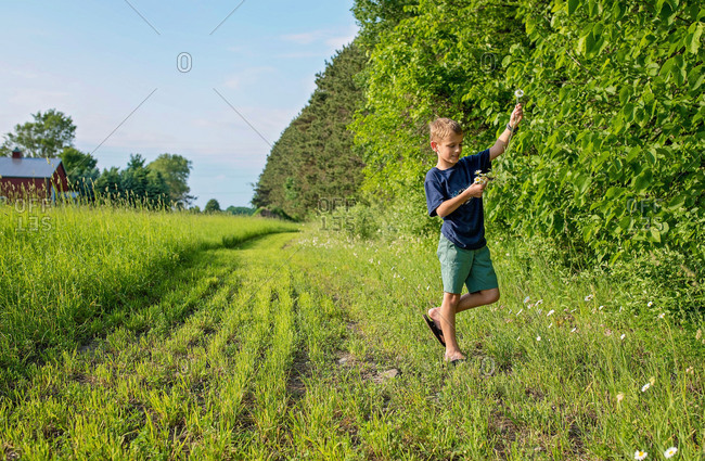 Boy picking wildflowers growing at the edge of a field
