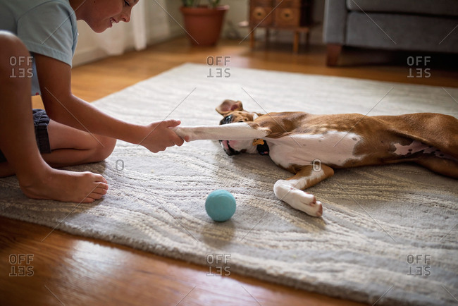 Boy playing with his pet dog on the floor