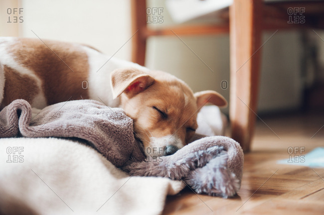 Nice puppy asleep at home quietly
