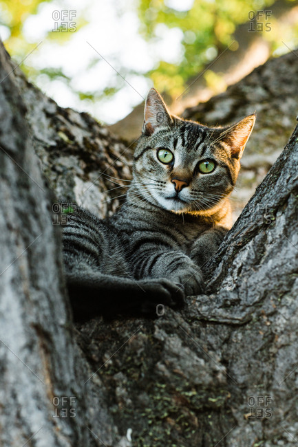 Stripped cat lying on tree