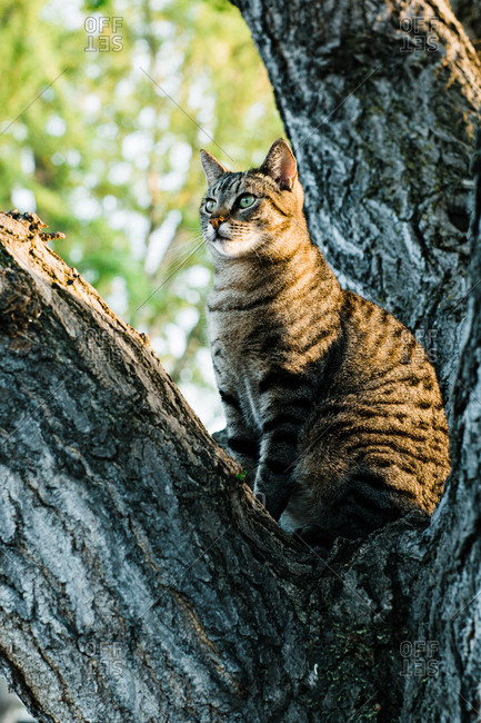 Cat sitting on tree and looking away