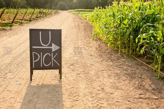 U-pick sign on a farm