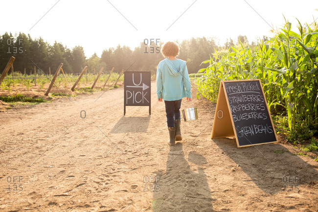 Back view of boy standing by sings on a U-pick farm