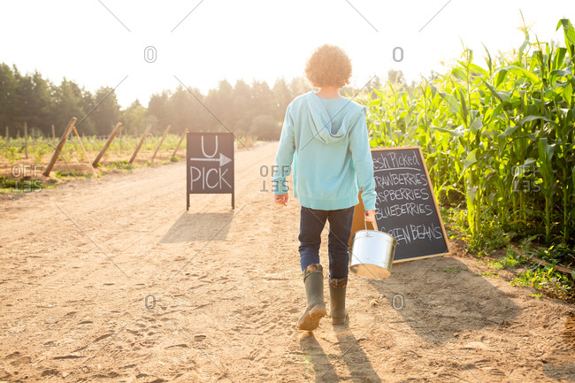 Rear view of boy standing by sings on a U-pick farm on a sunny day