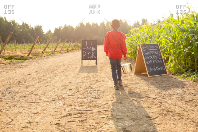 Rear view of little boy holding bucket and walking by U-pick sign on a farm