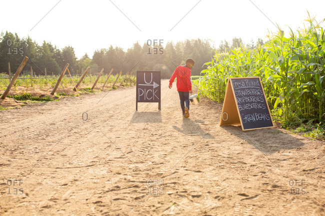 Rear view of little boy walking and holding bucket by U-pick sign on a farm