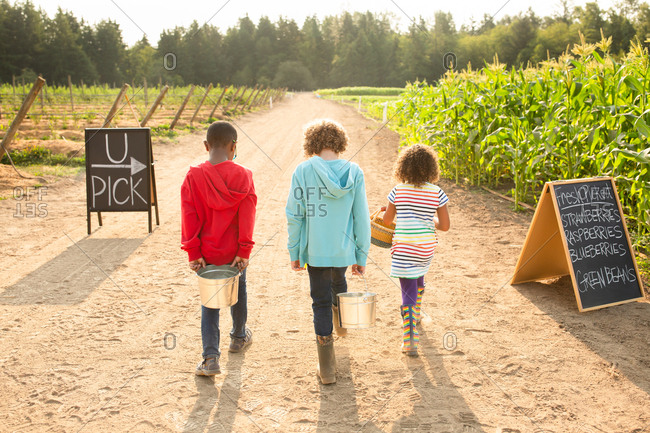 Rear view of three siblings walking together on a U-pick farm
