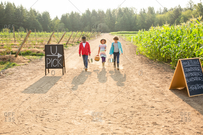 Three siblings walking together on a U-pick farm
