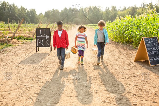 Three kids walking together on a U-pick farm