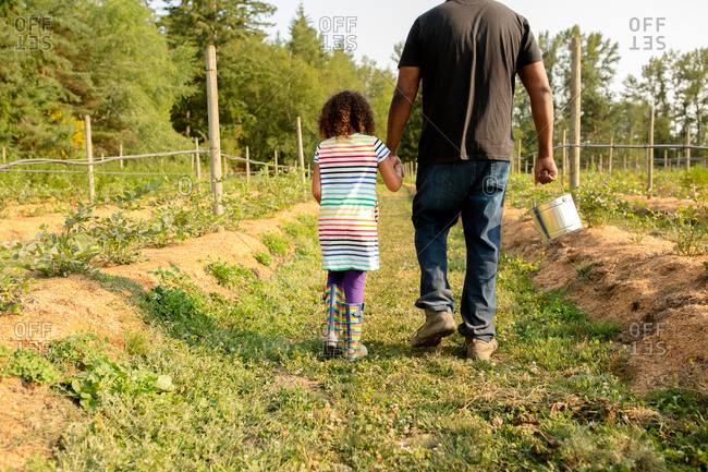 Father and daughter walking by blueberry plants on a U-pick farm