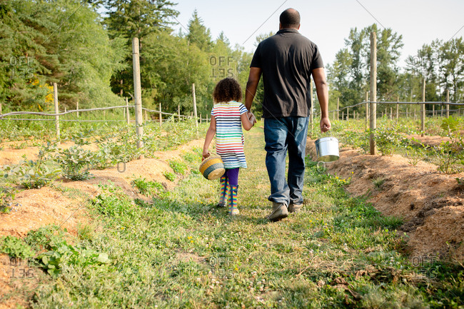 Dad and daughter walking by blueberry plants on a U-pick farm