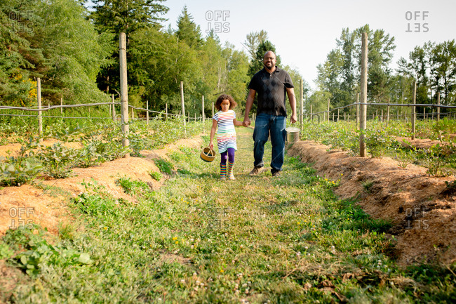 Father and little girl walking by blueberry plants on a U-pick farm