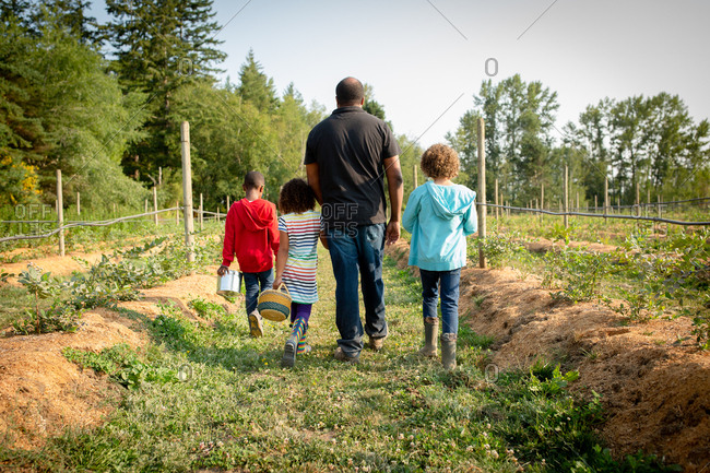 Father and three kids walking by blueberry plants on a U-pick farm