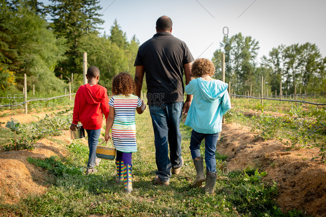 Father and his kids walking by blueberry plants on a U-pick farm