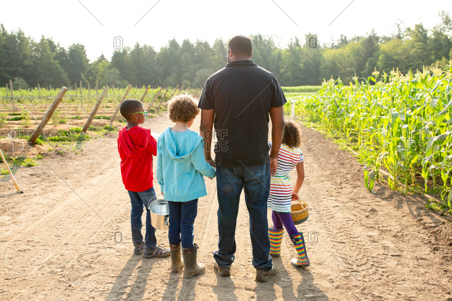 Father and children on a U-pick farm from behind