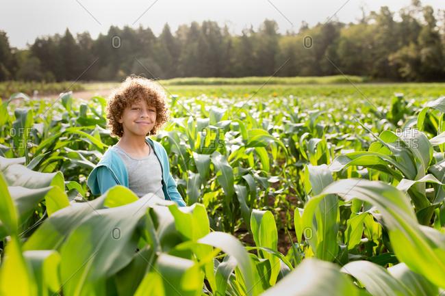 Young boy walking in a cornfield