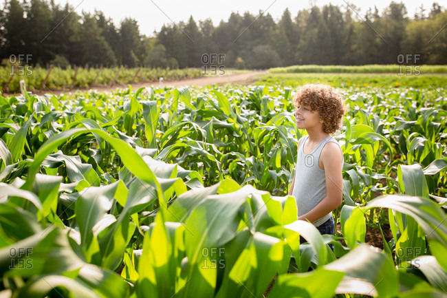 Young boy in a cornfield