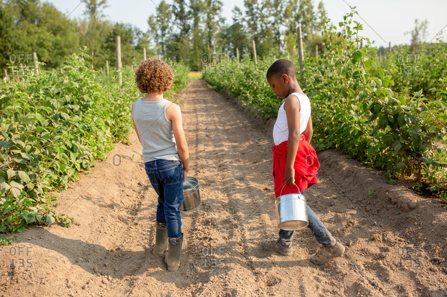 Two boys walking with buckets on a U-pick farm