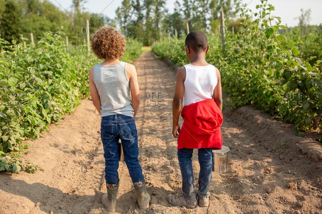 Two boys with buckets on a U-pick farm