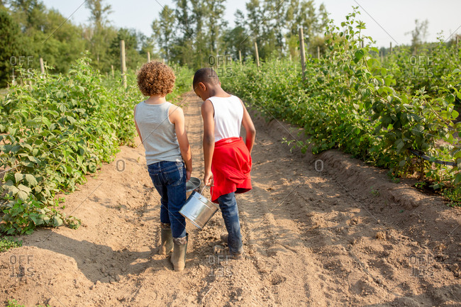 Two brothers walking with buckets on a U-pick farm