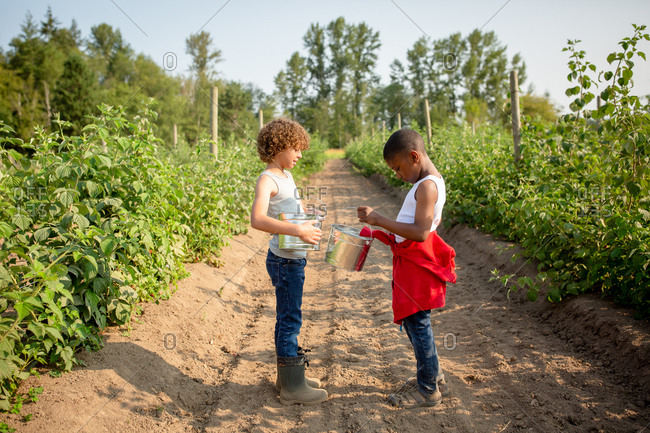 Two brothers with buckets on a U-pick farm